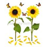 Samolepky na stenu slnečnica s motýľmi 82 cm x 105 cm