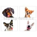 Samolepky na stenu selfie psi rozmer 45 x 65 cm