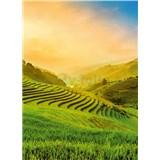 Vliesové fototapety terasovité rýžové polia vo Vietname rozmer 184 x 254 cm