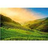 Vliesové fototapety terasovité rýžové polia vo Vietname rozmer 368 x 254 cm