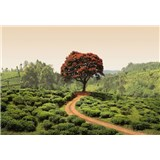 Vliesové fototapety červený strom na Srí Lanke rozmer 368 x 254 cm