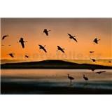 Vliesové fototapety vtáky pri západe slnka rozmer 368 x 254 cm