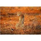 Vliesové fototapety leopard rozmer 368 x 254 cm