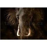 Vliesové fototapety slon rozmer 368 x 254 cm