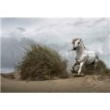 Fototapety divoký biely kôň rozmer 368 x 254 cm