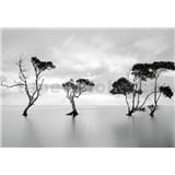Vliesové fototapety stromy v stojatej vode rozmer 368 x 254 cm
