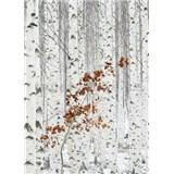 Vliesové fototapety brezový les rozmer 184 cm x 254 cm