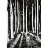 Vliesové fototapety tajomný les rozmer 184 x 254 cm