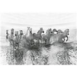 Fototapety biele kone rozmer 368 x 254 cm - POSLEDNÉ KUSY