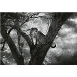 Vliesové fototapety leopard na strome rozmer 368 x 254 cm