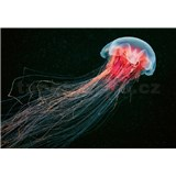 Vliesové fototapety medúza rozmer 368 x 254 cm