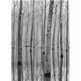 Vliesové fototapety březový les vo vode rozmer 184 cm x 254 cm
