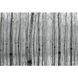 Vliesové fototapety březový les vo vode rozmer 368 cm x 254 cm