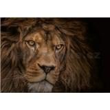 Vliesové fototapety lev rozmer 368 x 254 cm
