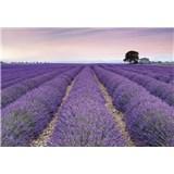 Vliesové fototapety Provence 368 x 248 cm