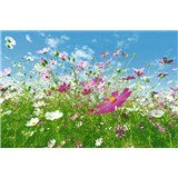 Fototapety Flower Meadow