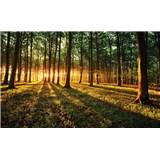 Fototapety les a západ slnka