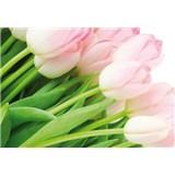 Vliesové fototapety ružové tulipány