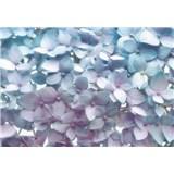 Fototapety modré hortenzie