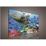 Obraz na stenu delfíny 75 x 100 cm