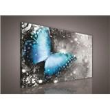 Obraz na stenu motýľ 75 x 100 cm