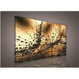 Obraz na stenu ranná rosa hnedá 75 x 100 cm